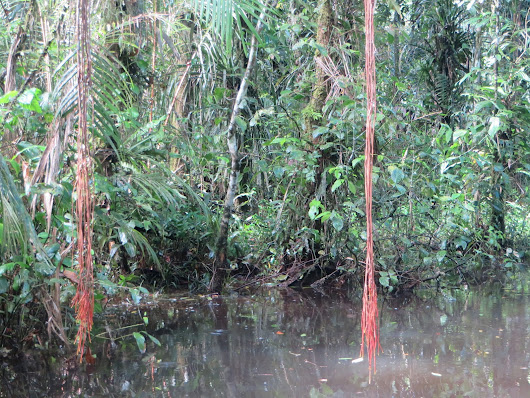 Cuyabeno reserve in the Ecuadorian Amazon positively teems with wildlife