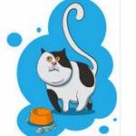 Chez la chat un régime trop strict peut induire à de la boulimie