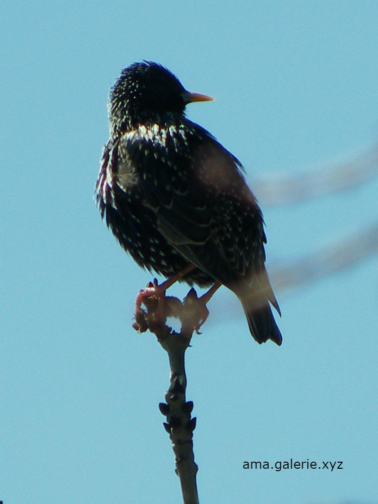 Drôles d'oiseaux par Ama artiste à Vergons Alpes de Haute Provence