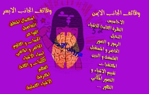 صورة: وظائف الجانبين الأيمن و الأيسر للدماغ