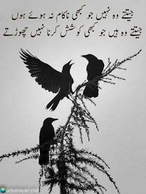 Jitne Woh Nahi Jo Kabhi Nakam Na Howay Hoo..  Jittay Woh Hai Jo Kabhi Koshish Kerna Nahi Chorte..!!  #poetry #urdushayari #lines