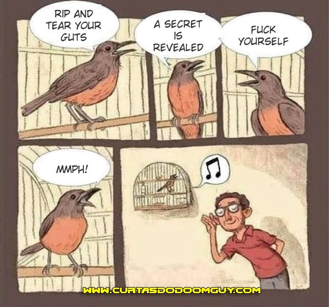 O significado do canto dos pássaros