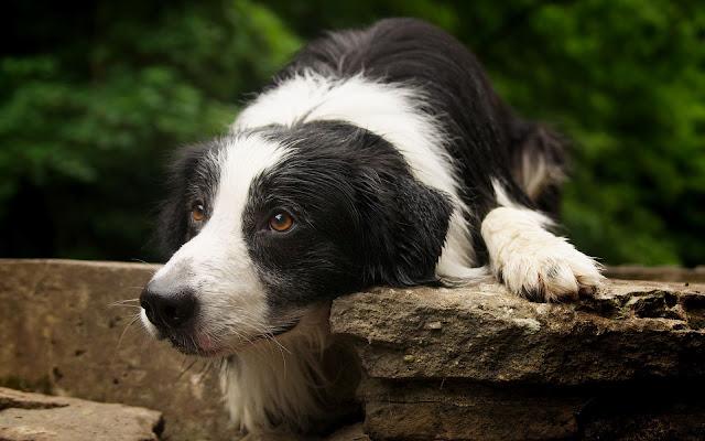 Hond op de stoep