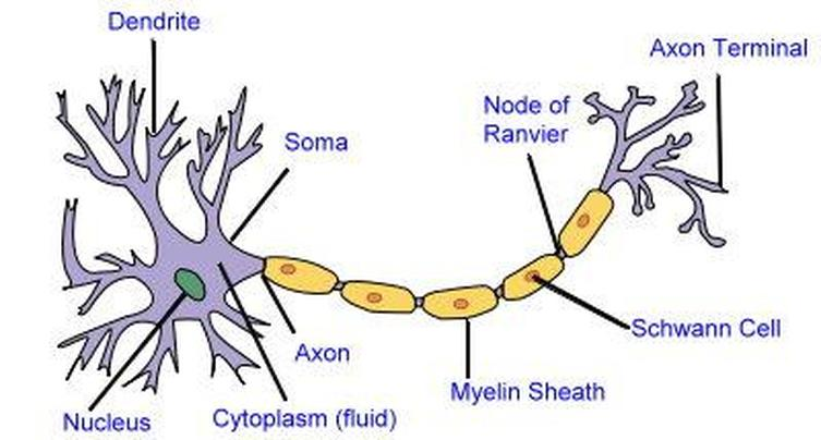 Horse Life and Love: All About ... Nerve Cells