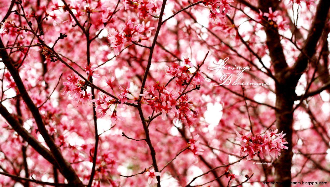 Pink Flowers Wallpaper Tumblr Amazing Wallpapers