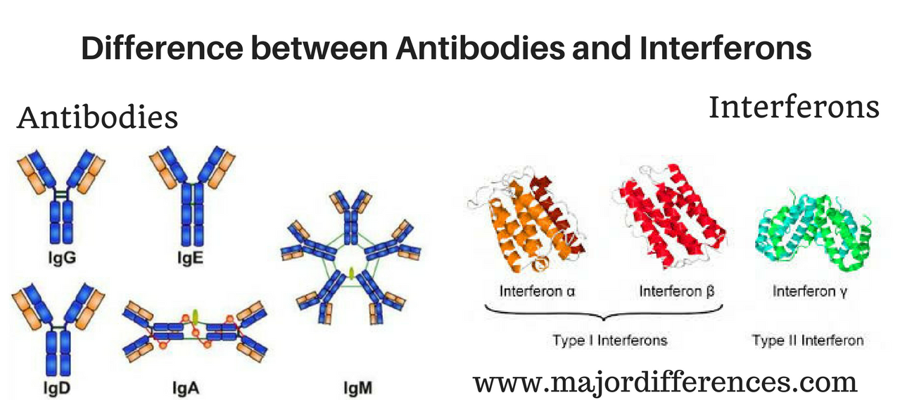Difference between Antibodies and Interferons (Antibodies vs Interferons)