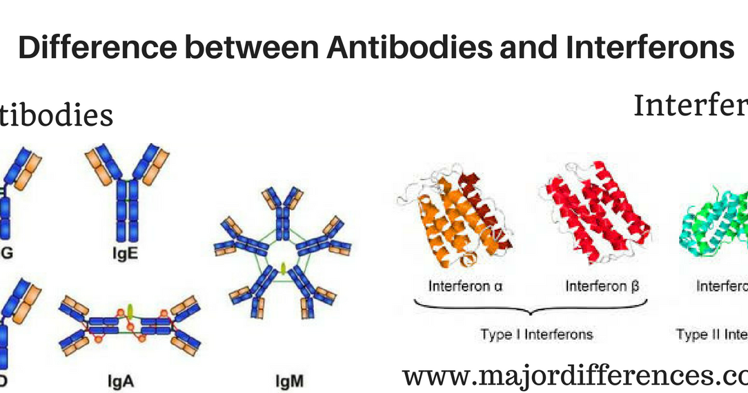 difference between antibodies and interferons  antibodies