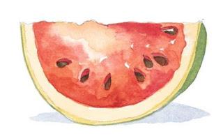 Watermelon sketch