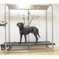 criando músculos em cães