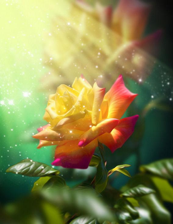 Imagenes de rosas y flores hermosas - Rosas rosas hermosas ...