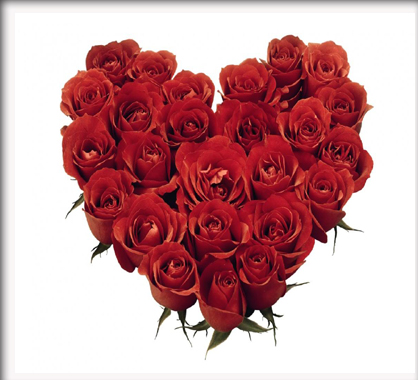 Bunga Mawar Merah Love Mawar Ku