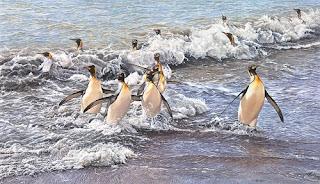 Paintings of King Penguins