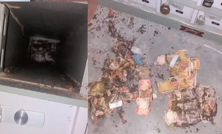 termite-on-1-5-lack-rupees-note-in-bank-locker-of-kangra-central-cooperative-bank