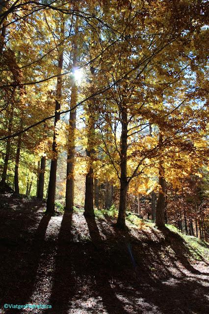 Pirineu Aragonès, colors de tardor