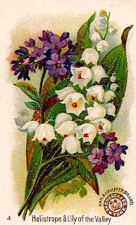 flower wildflower botanical artwork trade card image victorian