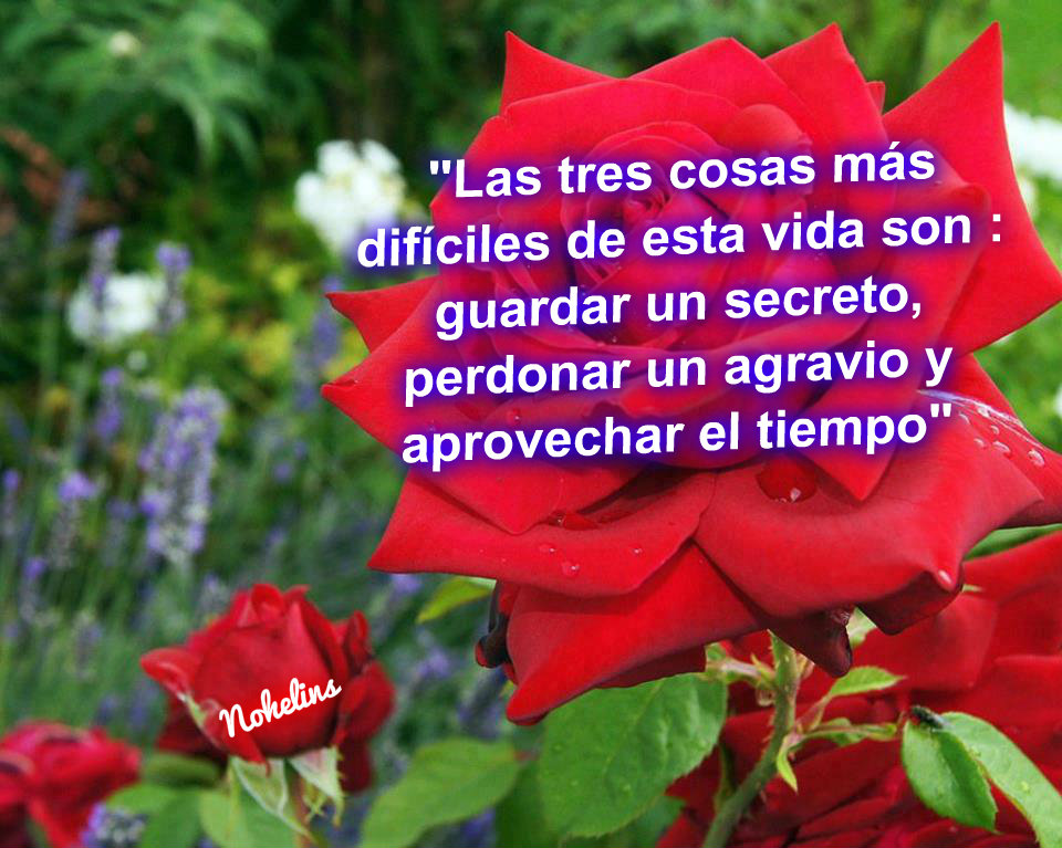 Amor Frases Que Inspiran Y Motivan: ♥♥FRASES DE MOTIVACION, SUPERACION
