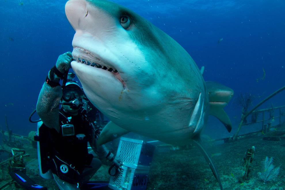 اسماك القرش تحت الماء Joi-feeding-Carribea
