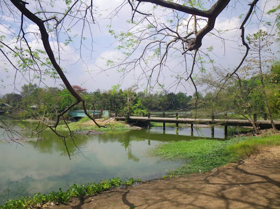Lagoon inside Ninoy Aquino Parks and Wildlife Center where Lolong is planned to be placed.