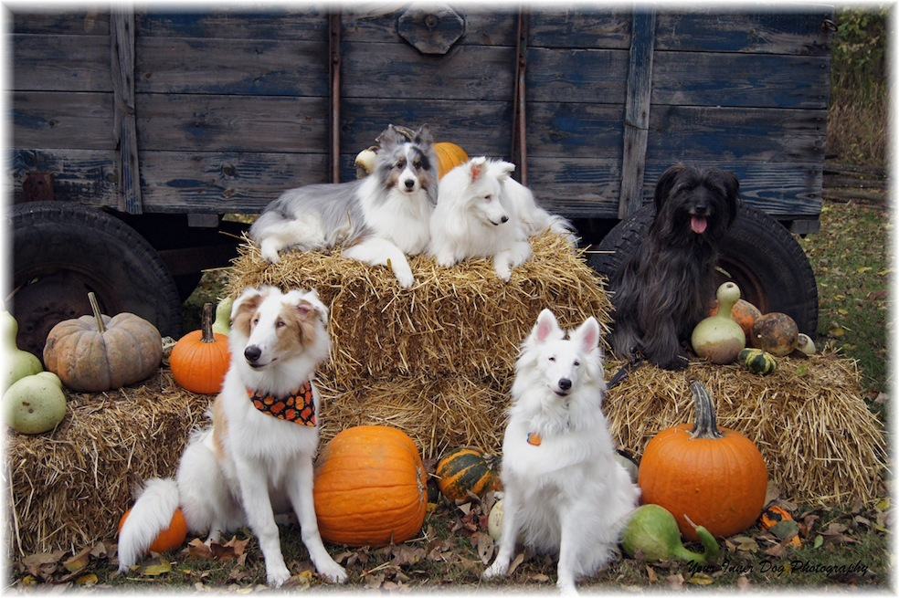 Five blind and deaf dogs and their adoptive family. Please consider adopting blind and deaf dogs