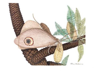 'Jurassic butterflies' discovered