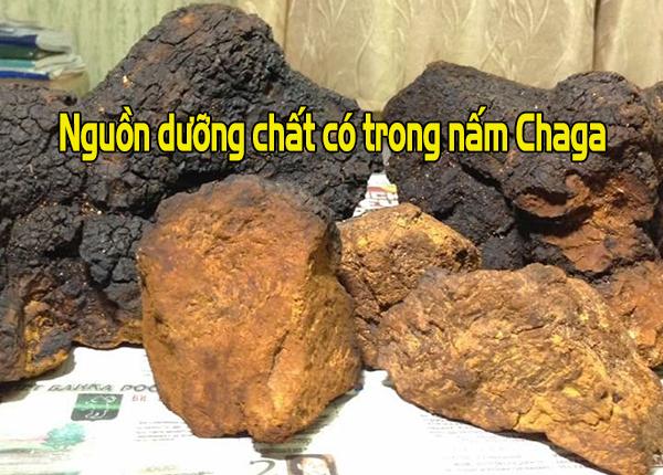 Tìm hiểu nguồn dưỡng chất có trong nấm Chaga