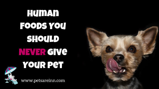 human food  pets