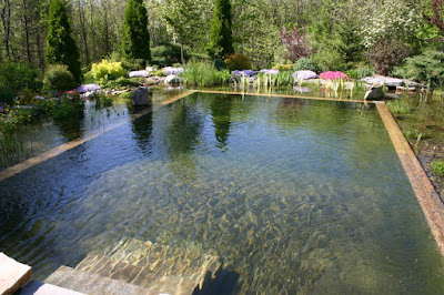 Purify Water with Natural Swimming pool