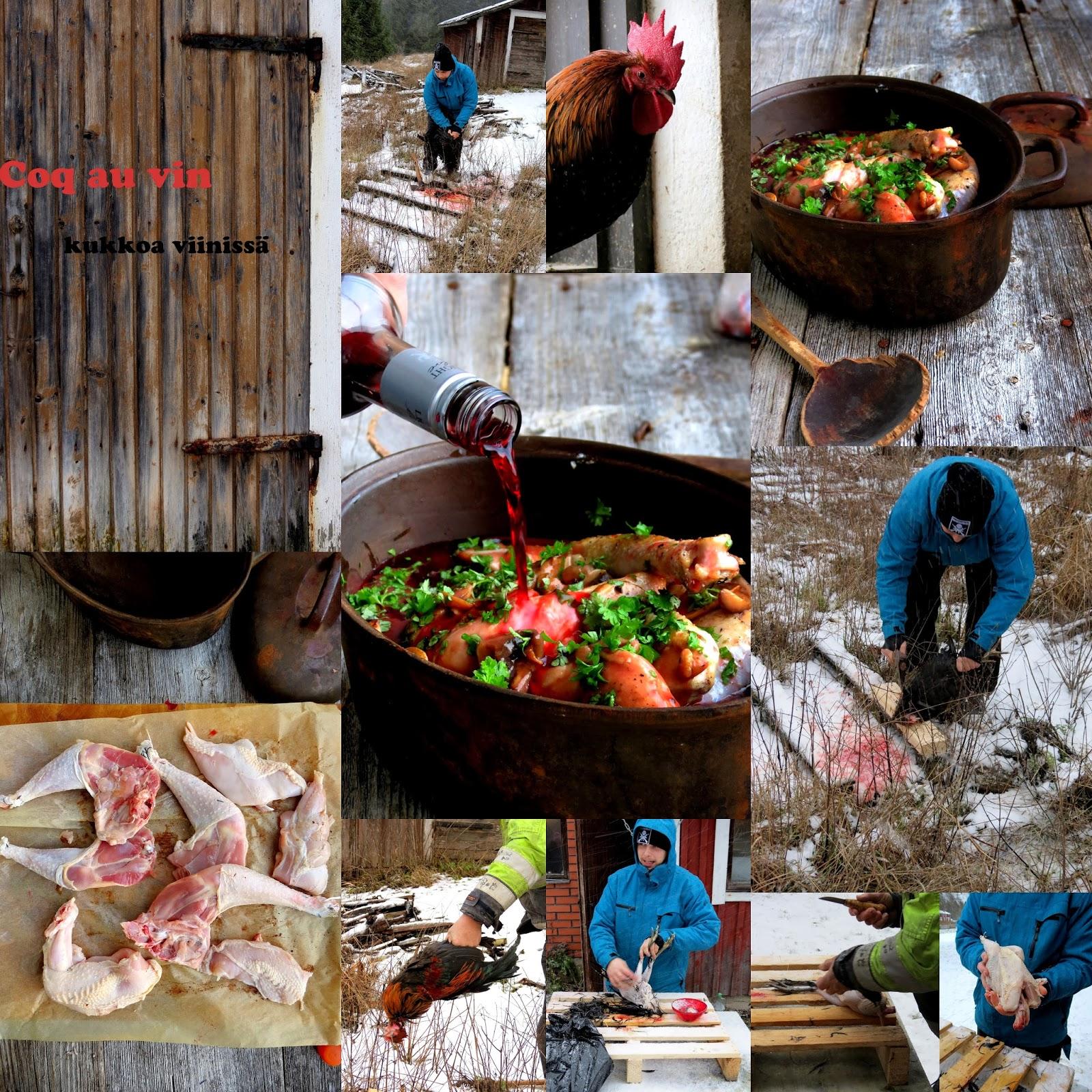 viinissä haudutettu kana