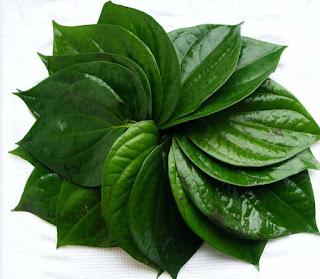 Obat Sipilis Tradisional Daun Sirih