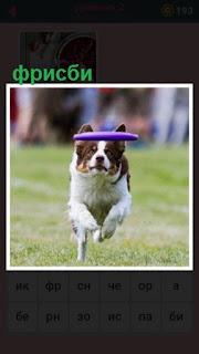 651 слов собака играет в фрисби, ловит диск 2 уровень