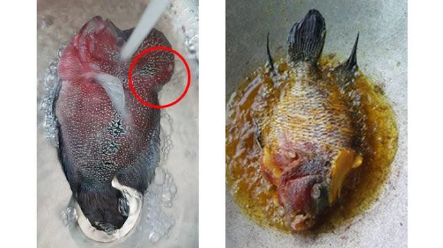 Viral, Orang Kaya ini Goreng Ikan Lohan Jutaan Rupiah, Ternyata Begini Rasanya!