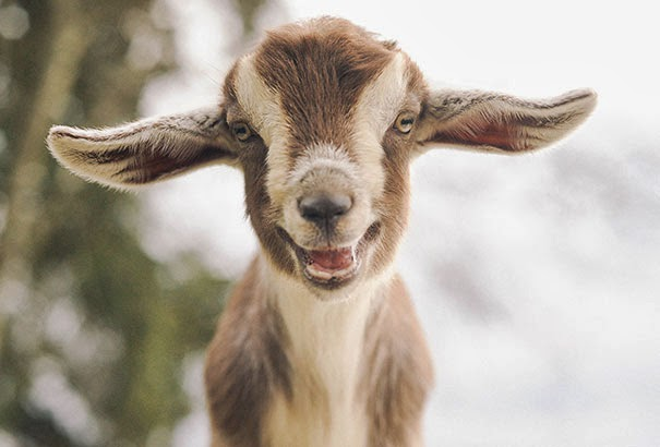 happiest animals ever