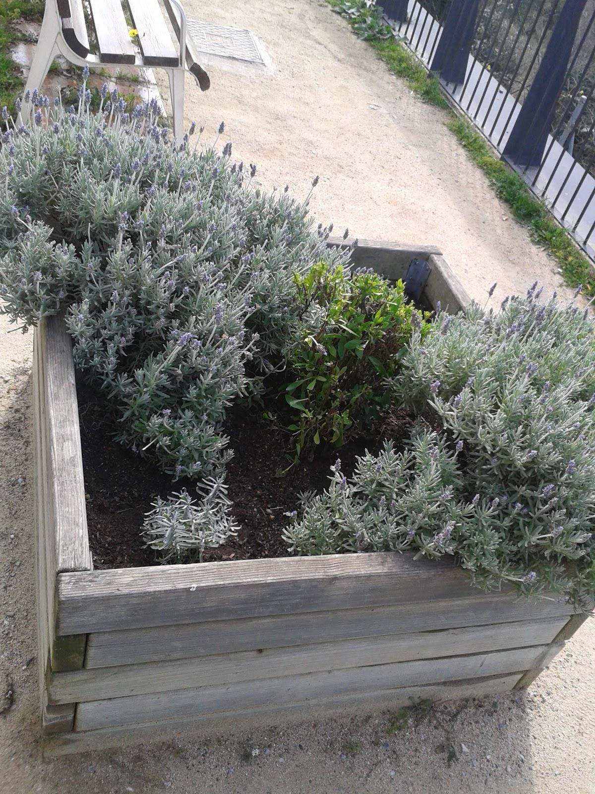 El rincon de un jardin rincones con encanto ermita de sant pere de reixac - Rincones de jardines con encanto ...