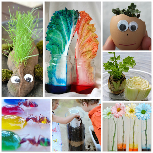 Amazing Spring science experiments for kids that explore weather, plants, nature & more!