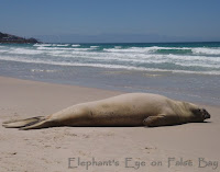 Current post at Elephant's Eye on False Bay (click image for link)