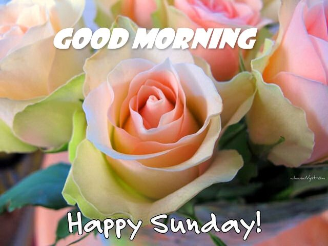 Happy Sunday And Good Morning Wishes Images With Quotes And Sayings - Really ...