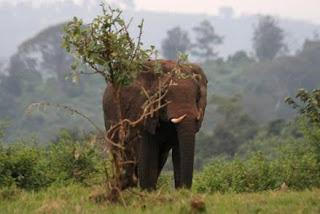 Kenia mujeres
