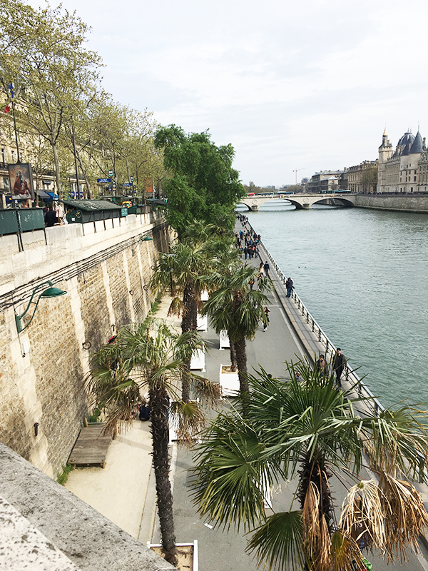 palm trees by the Seine