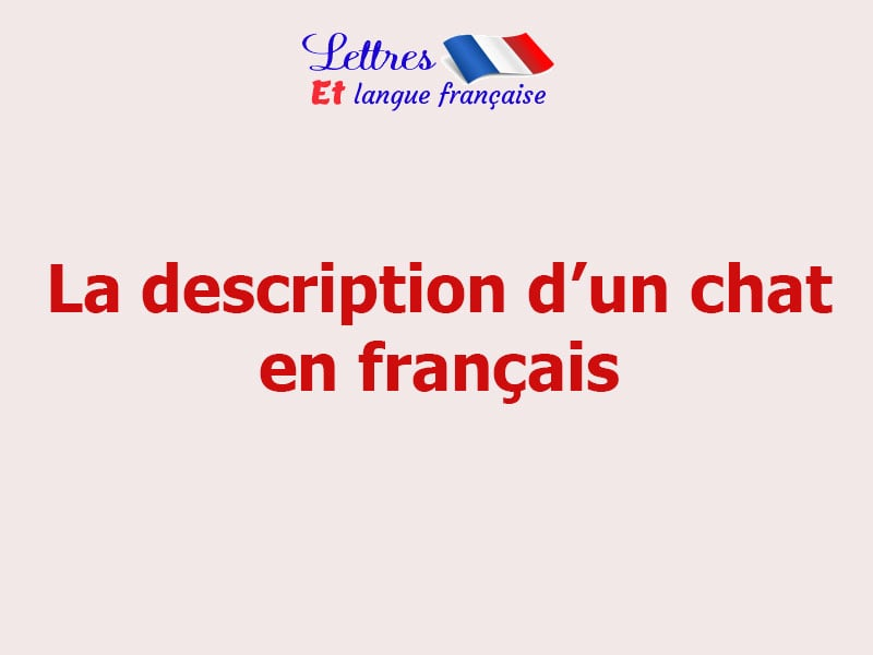 Description d'un chat en français
