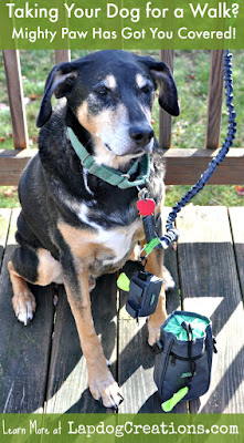 senior hound mix dog with mighty paw accessories