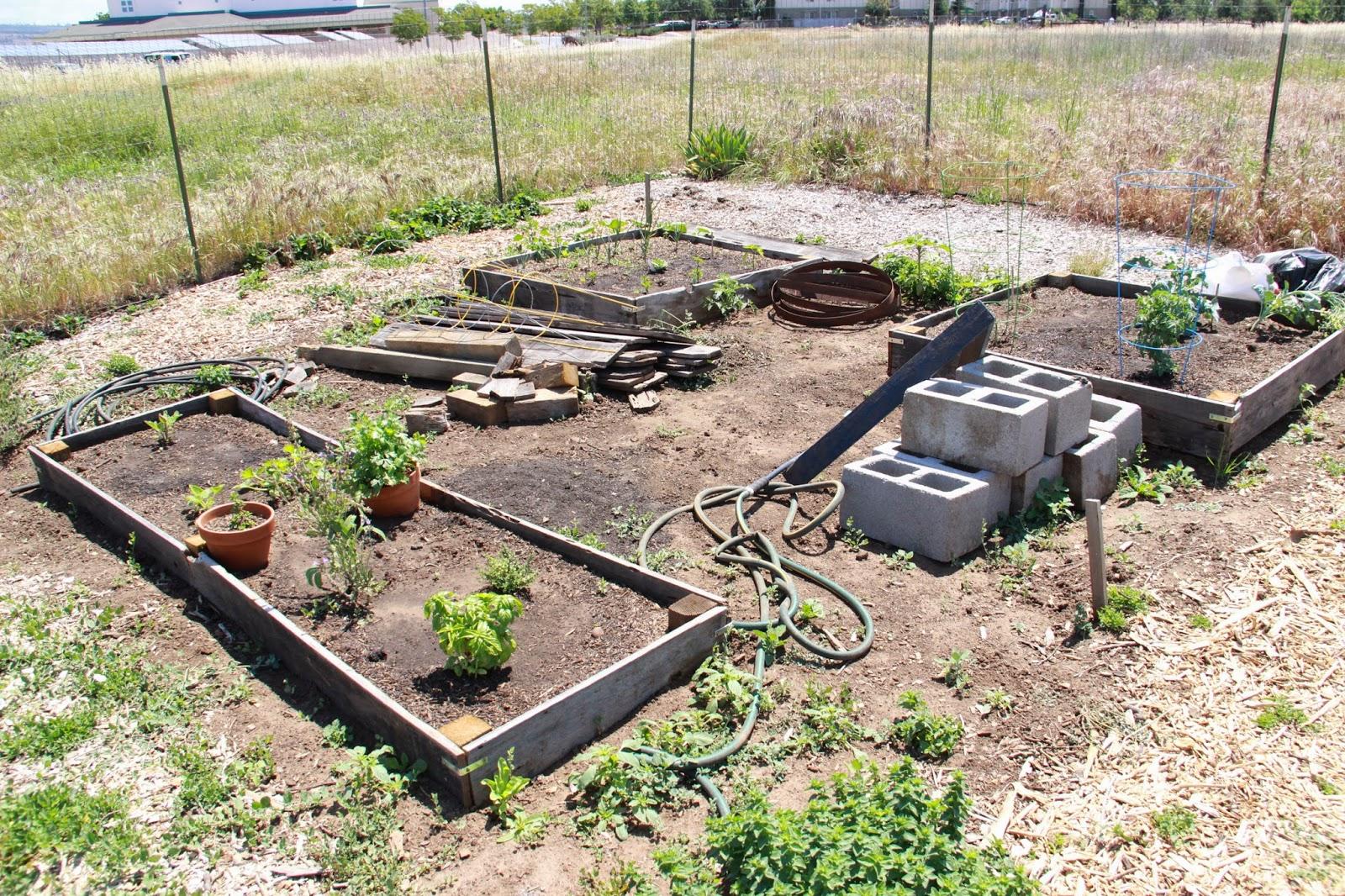 My First Garden: Photos: 7 different community garden plot ...
