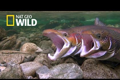 Nat Geo Wild Europe HD - Hotbird Frequency