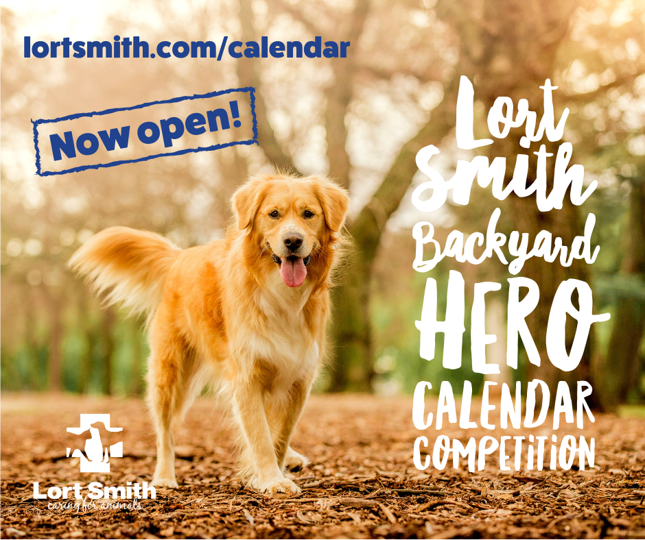 Lort Smith 2020 Calendar Competition Now Open Australian Dog Lover