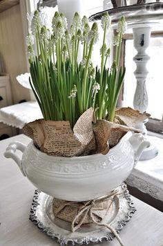 white-ironstone-tureen-planter