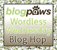 http://blogpaws.com/executive-blog/pet-parenting-health-lifestyle/wordless-wednesday/wordless-wednesday-blog-hop-photo-tips/