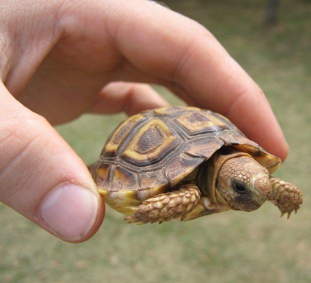 10 Hewan Terkecil di Dunia yang Sangat Menggemaskan