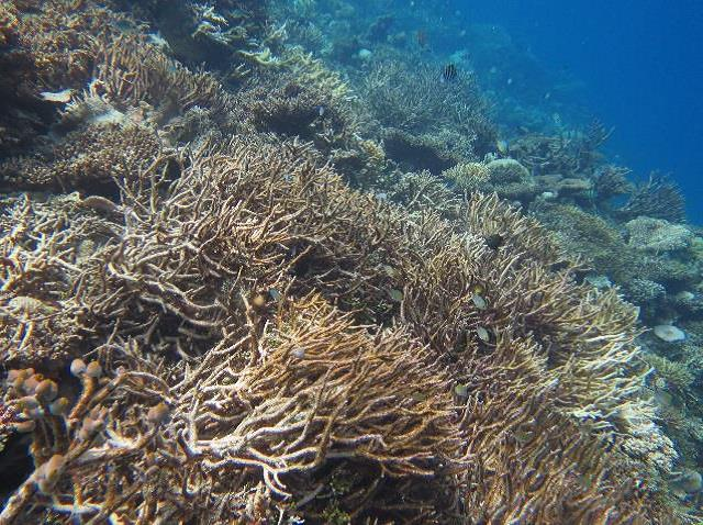 Impacts of mass coral die-off on Indian Ocean reefs revealed