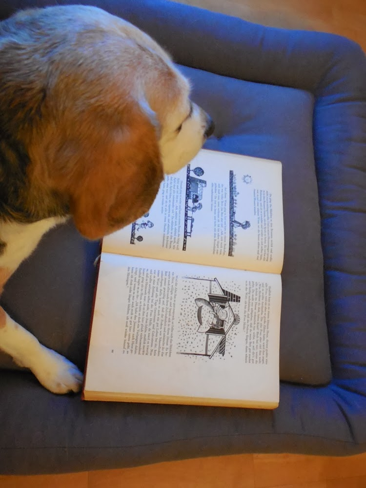 beagle tibi 39 s leben fotos und geschichten tibi schimpft grummelt wo ist der winter. Black Bedroom Furniture Sets. Home Design Ideas