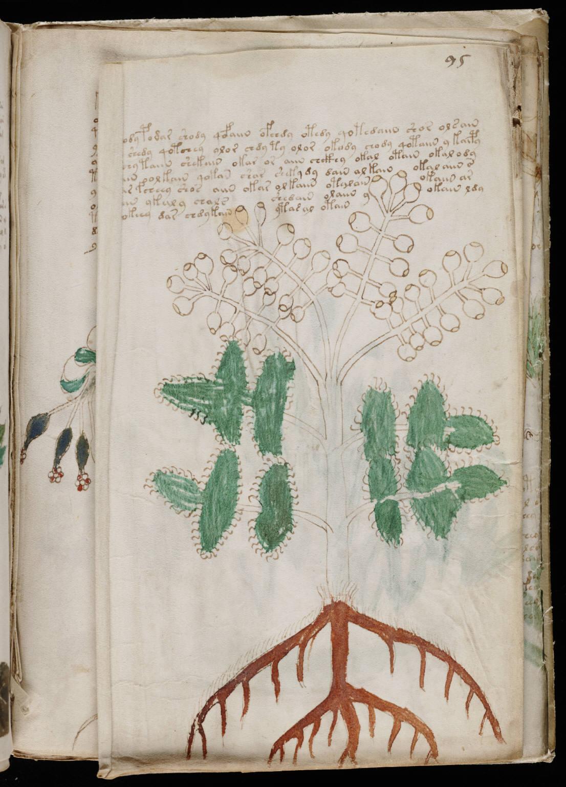 manuscrito169