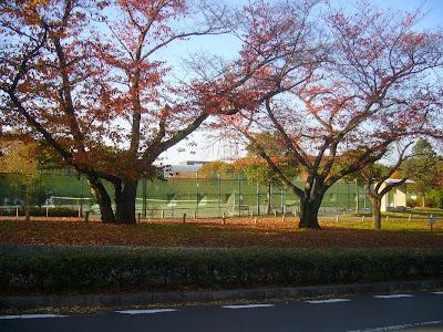 寝屋川公園 テニスコート